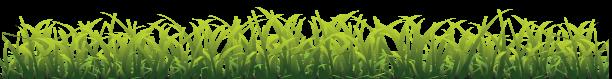 Grass_w